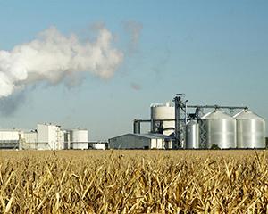 Администрация Воронежской области заинтересована в глубокой переработке зерна