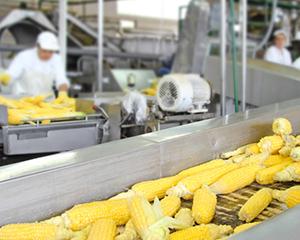 Перспективы глубокой переработки зерна